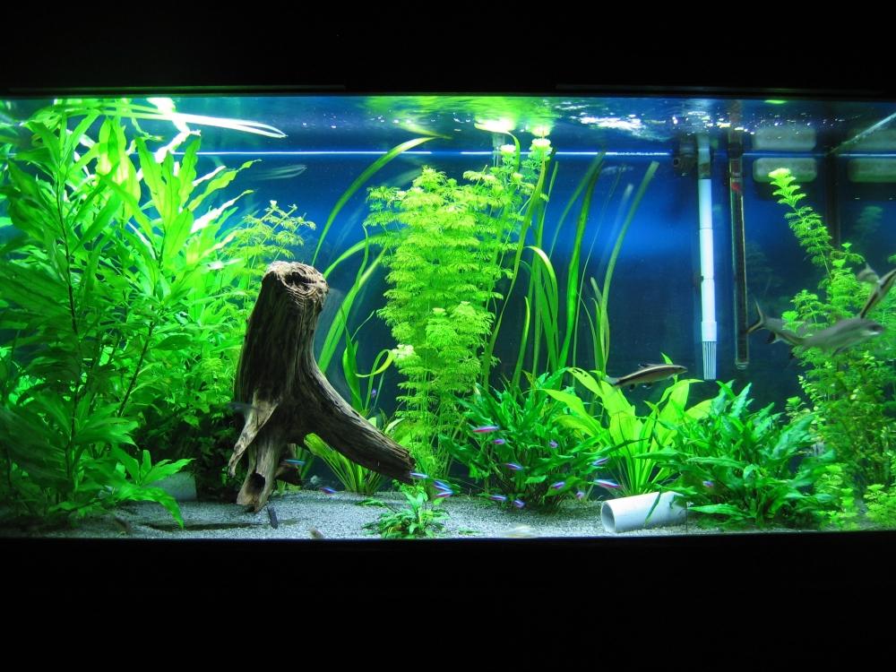 Akvaariot, valaisimet ja putket
