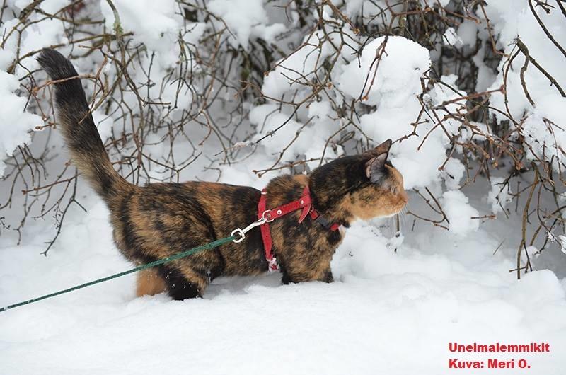 Kissan valjaat, pannat ja hihnat